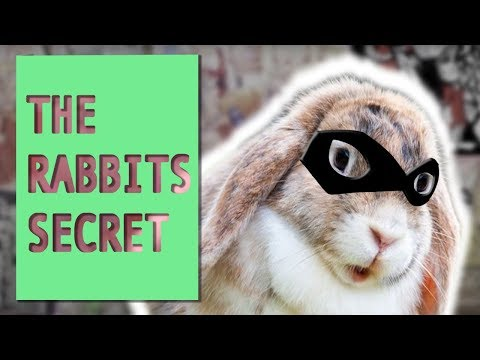 The Rabbit's Secret - Artist Guild