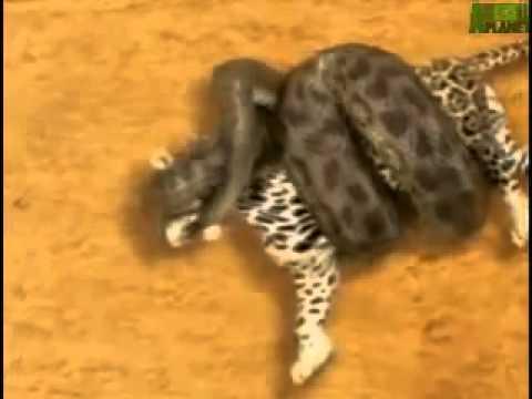 Anaconda music video - 3 1