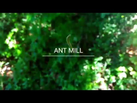 ANT MILL - Homemade