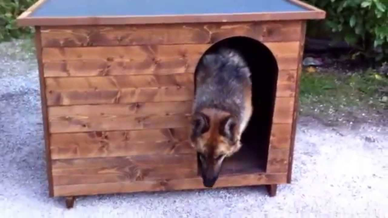 Cuccia hera con pastore tedesco youtube for Cucce per gatti da esterno coibentate