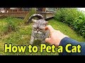 How To Pet A Sassy Cat Using Wiggle Finger - American Shorthair の動画、YouTube…