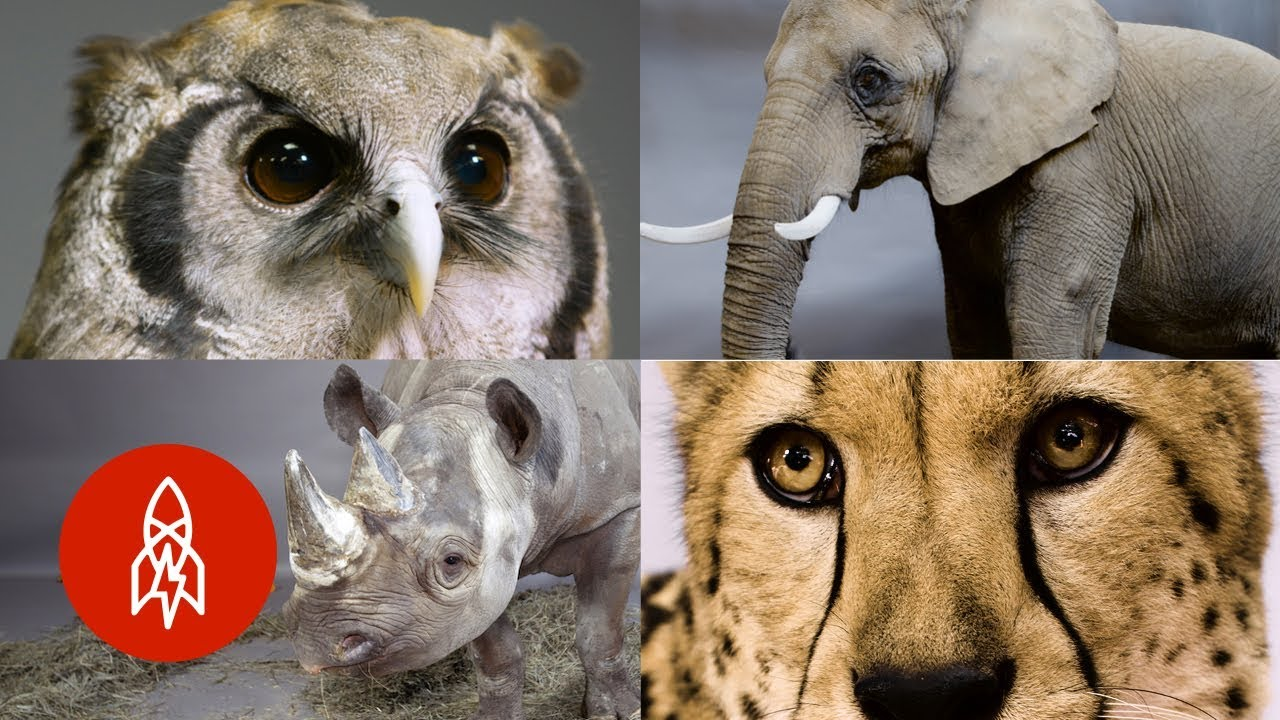 Some of Africa's Most Incredible (and Endangered) Animals