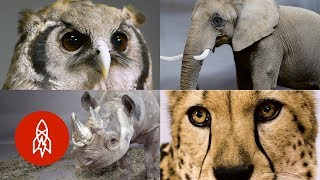 Meet Some of Africa's Most Incredible (and Endangered) Animals