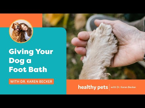 Giving Your Dog A Foot Bath