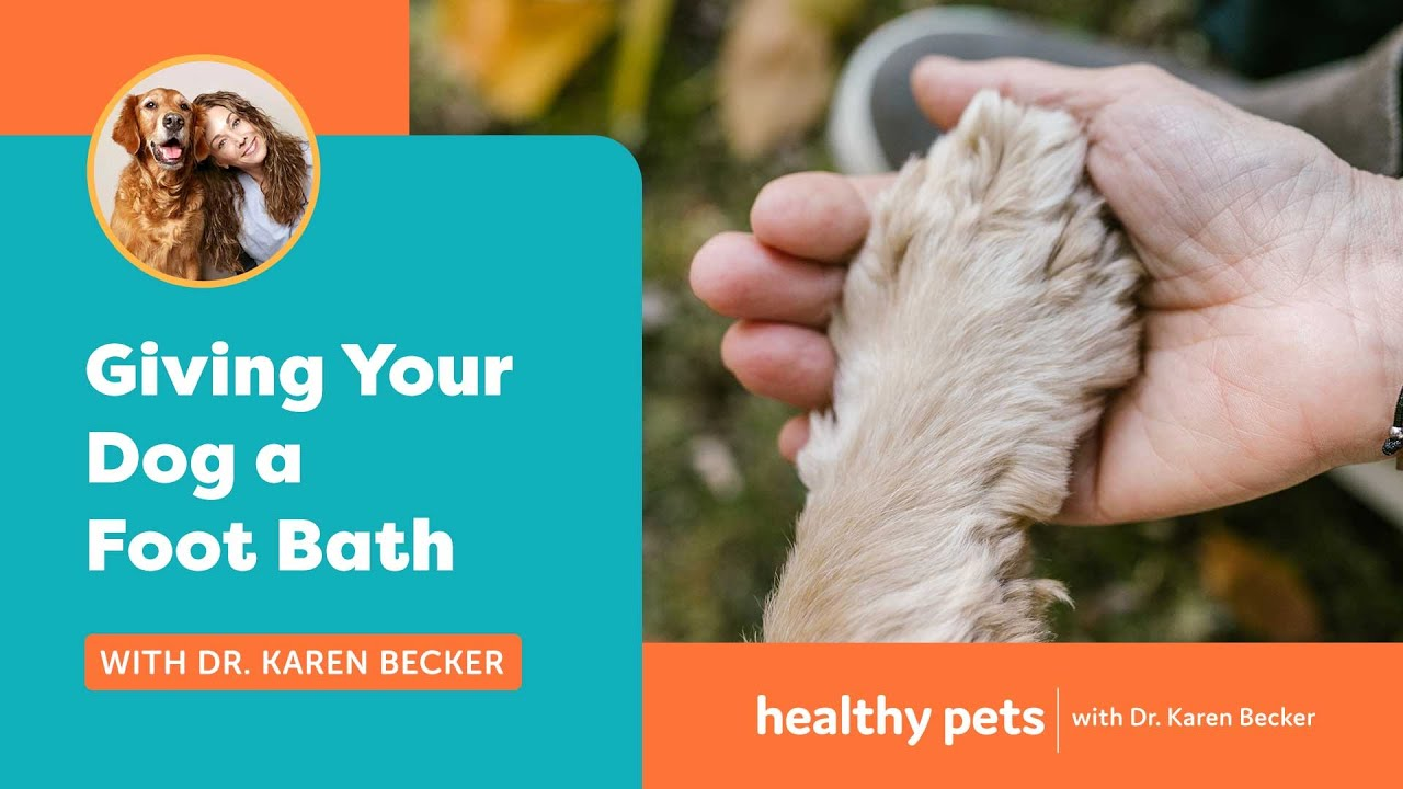 Paw licking is a common behavior in dogs, but a healthy dog should not excessively paw lick...