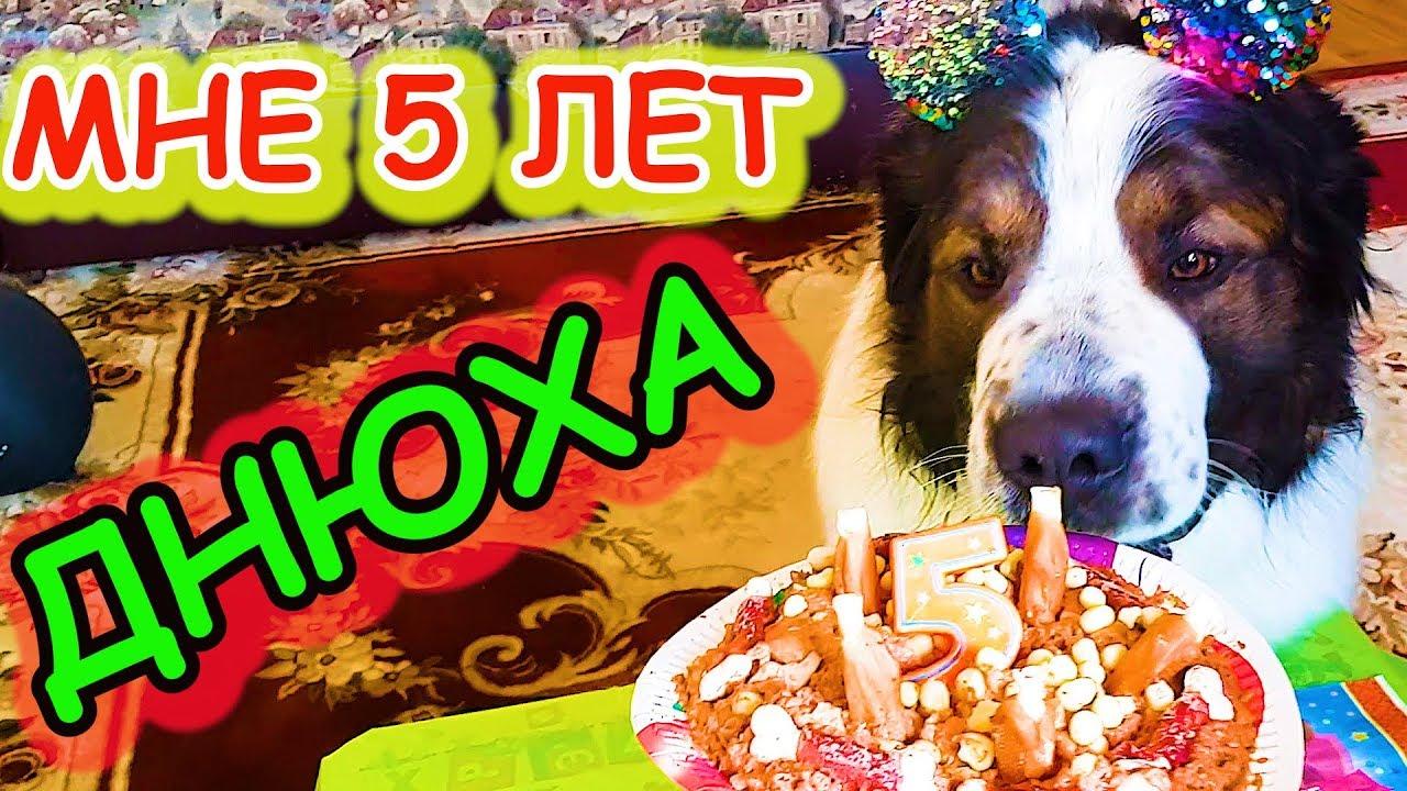 День рождения собаки Булата. Бандит звонил по скайпу. Торт ...