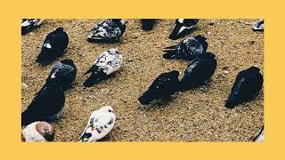 """Track 4 de nuestro segundo álbum """"El Camino"""" Suscríbete al canal de..."""