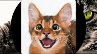 коврик для кошки //ЧИСТЫЕ ЛАПЫ //двухслойный коврик//кошачий туалет