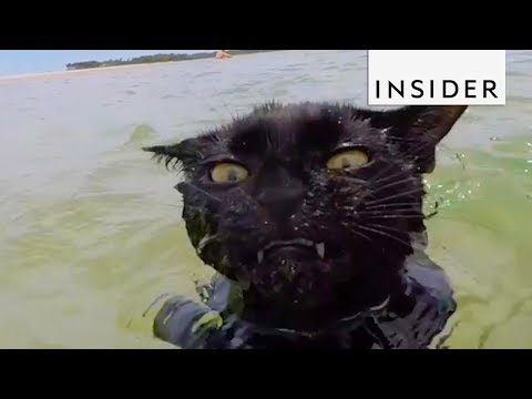 Cat Can't Get Enough Of Swimming At The Beach