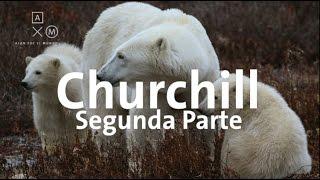 Osos polares en Canadá Parte 2 | Alan por el mundo