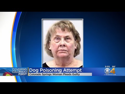 Laura - Colorado Springs woman wearing a cat shirt tried to poison neighbor's dog