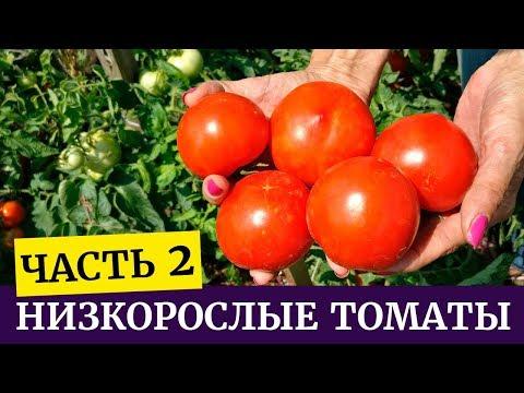 Низкорослые томаты, обзор гибридов и сортов часть 2 | низкорослые | выращивание | башмакова | томатов | татьяна | гибриды | часть_2 | томаты | томата | елисей