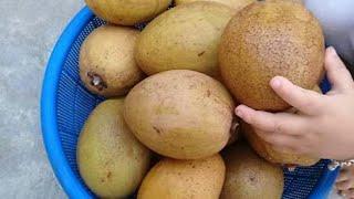 cây ăn quả trồng ở miền bắc không bị mất mùa và năng suất