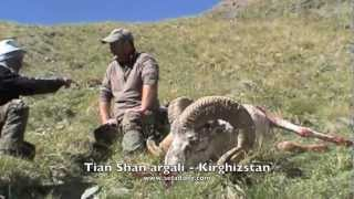 Video SHEEP of the Old World - Hunting (Chasse) ARGALIS - Part 2 by Seladang download MP3, 3GP, MP4, WEBM, AVI, FLV Juni 2018