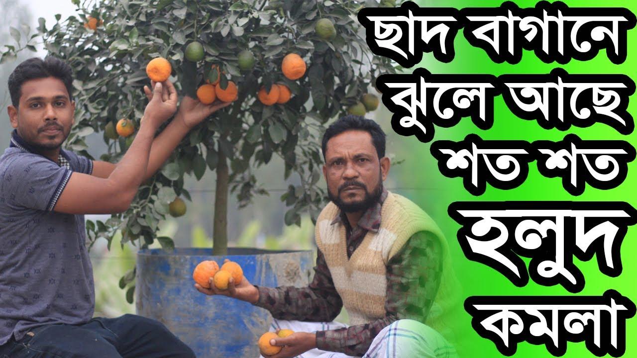টিপু ভাইয়ের ছাদবাগানে মন জুড়ানো হলুদ কমলা মাত্র ১ বছরের গাছে | Rooftop Gardening in Bangladesh