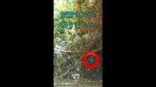 あなたは見える?「妖精が映りました」見た人に奇跡が起こる沖縄神の島【久高島】森の精霊たち