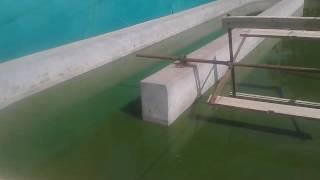 Spirulina cultivation in Tamil Nadu, India(2)