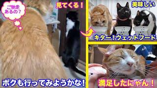 <2匹の猫通信>「ほっこりライブ」ドア開けハッチについて行くマックとめめちゃん!その先はご馳走だ!2020 04 09- Cat Live Stream in Japan - Cat Life TV