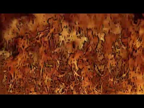 Leopard - Scott McCulloch