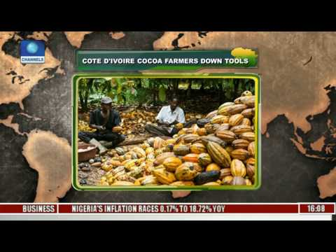 Network Africa: Cote D'Ivoire Cocoa Farmers Down Tools