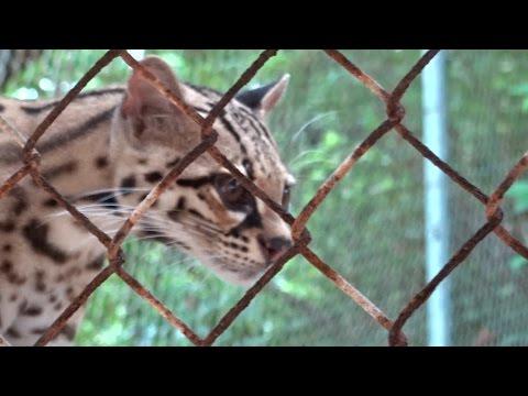 Animal Sanctuary - Maya Key, Roatan, Honduras (2.18.15)