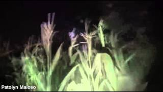 UFO | OVNI: Objetos Luminosos Grabados Sobre Campos de Maiz en Polonia (2015)