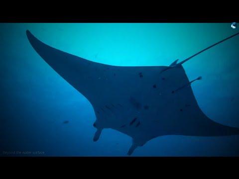 Scuba Diving German Channel, Palau [1080p]
