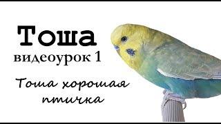 """🎤 Учим попугая по имени Тоша говорить. Видеоурок 1: """"Тоша хорошая птичка!"""""""