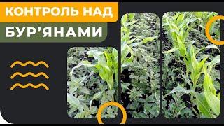 Пріма - гербіцид на зернові такукурудзу. 2,4Д і флорасулам. Сингента