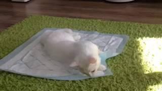 Рыдать хочется: кот отходит от наркоза