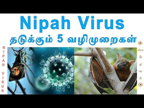 How to prevent Nipah virus | Tamil | Nipah Virus 5 Steps | Pokkisham | Vicky