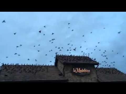 The Birds - 2