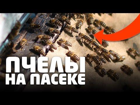 Мед с прополисом - мощное лекарство от множества недугов