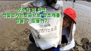 환경악영향??맛소금???천일염소금으로 맛조개 잡기 가능할까?
