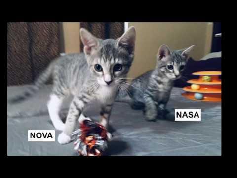 NASA & Nova