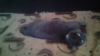 Кошка съела таблетку валерьянки