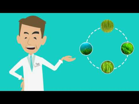 Chlorella vs Spirulina vs Wheatgrass vs Barley Grass - Bio2go™ Chlorella