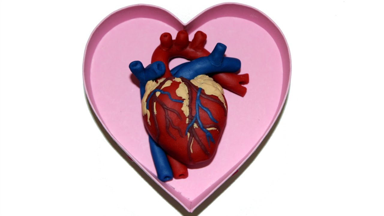 How To Make A Human Heart For Valentines Day With Play Doh By Tiger Tomato