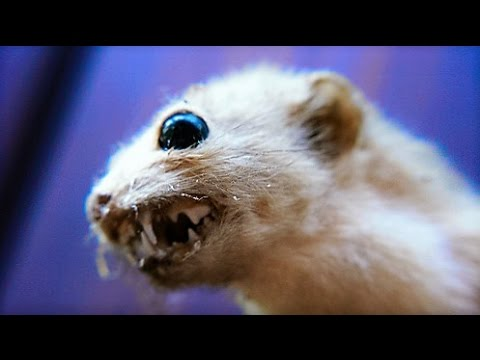 13 MEANEST Mammals on Earth