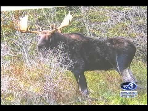 WNT MassWildlife Moose Warnings - September 26th, 2017