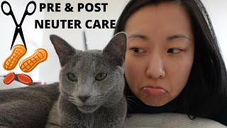 Cat Neutering: Our Experience and Practical Care Tips