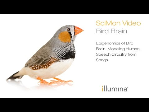 Epigenomics of Bird Brain: Modeling Human Speech Circuitry from Songs | Illumina SciMon Video