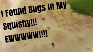 I FOUND BUGS IN MY SQUISHY !!! EWWWWWW!!!!