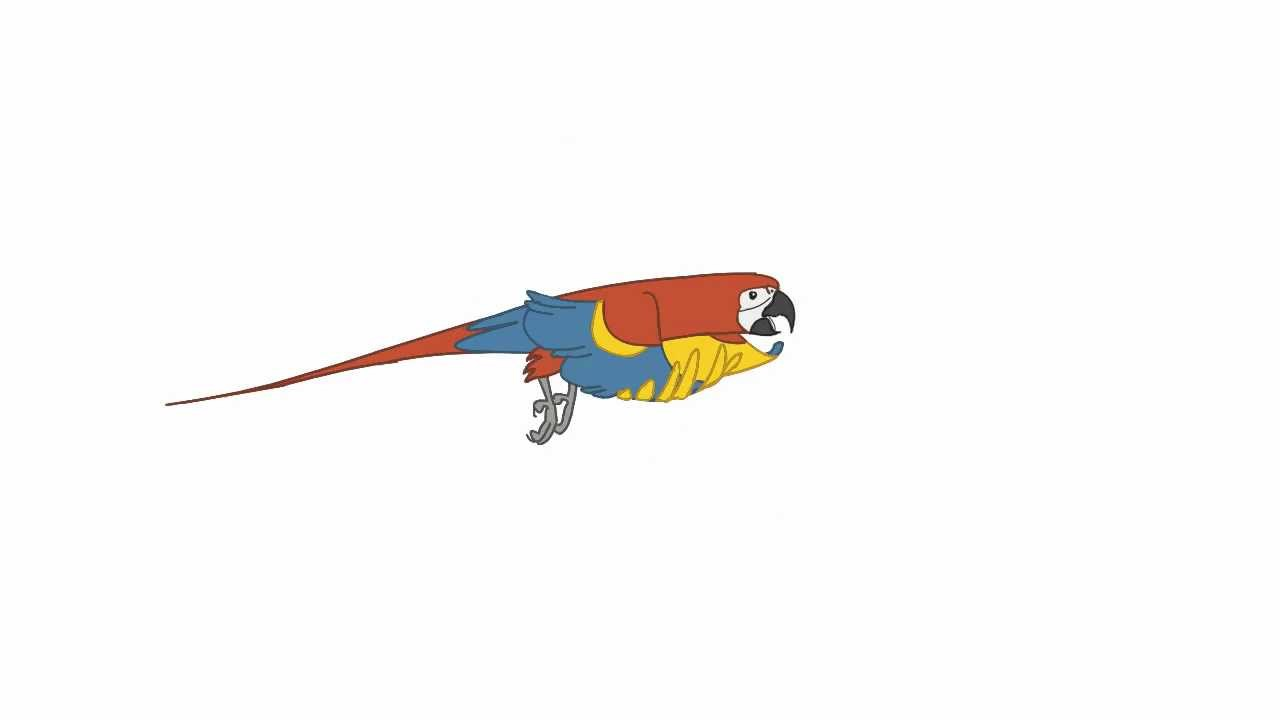 parrot flight cycle youtube