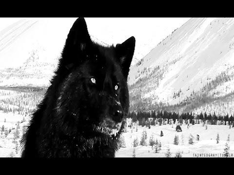 Wolf Breeds