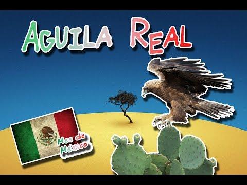Águila-real-|-la-realeza-de-las-aves|-(animales-del-mundo)-|mes-de-méxico|