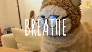 Breathe - DJ Komang Rimex (Vietsub + Lyric)