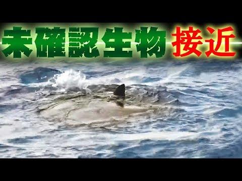 GT狙ってたら超巨大な未確認生物が接近してきた!!沖縄GTハント#7前編TJ