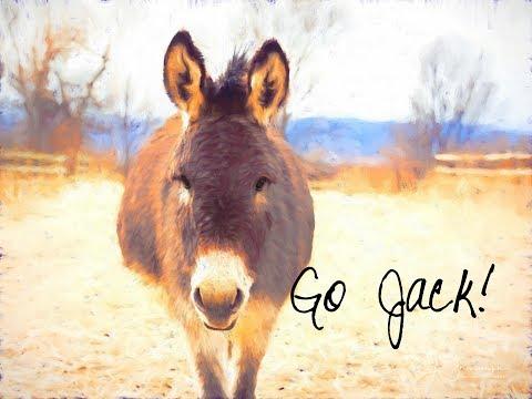 Jack, the donkey, learning that fly spray won't kill him!