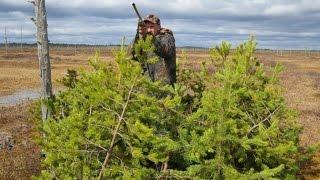 Охота на гуся 2016 (весна) выезд 1(Представляю Вашему вниманию очередной фильм о моей охоте . Охота проходила в Архангельской области на..., 2016-06-11T18:25:22.000Z)